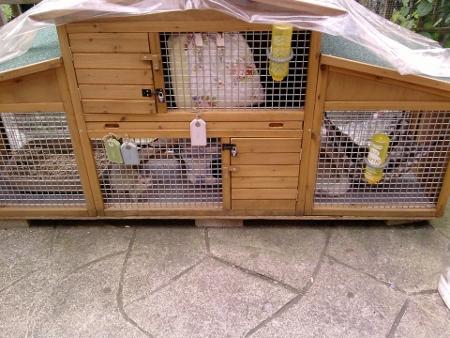 Ferret Housing